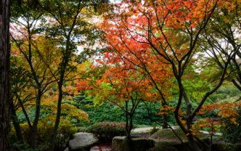 mehrere Bäume in bunten Herbstfarben in einem Hamburger Park